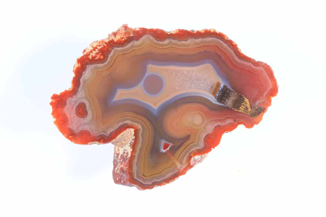 Laguna Agate with intense color varieties.